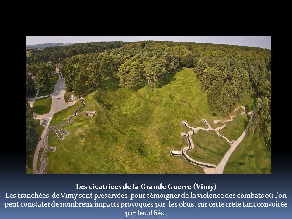 Les cicatrices de la Grande Guerre (Vimy) Les tranchées de Vimy sont préservées pour témoigner de la violence des combats où l'on peut constater de nombreux impacts provoqués par les obus, sur cette crête tant convoitée par les alliés.