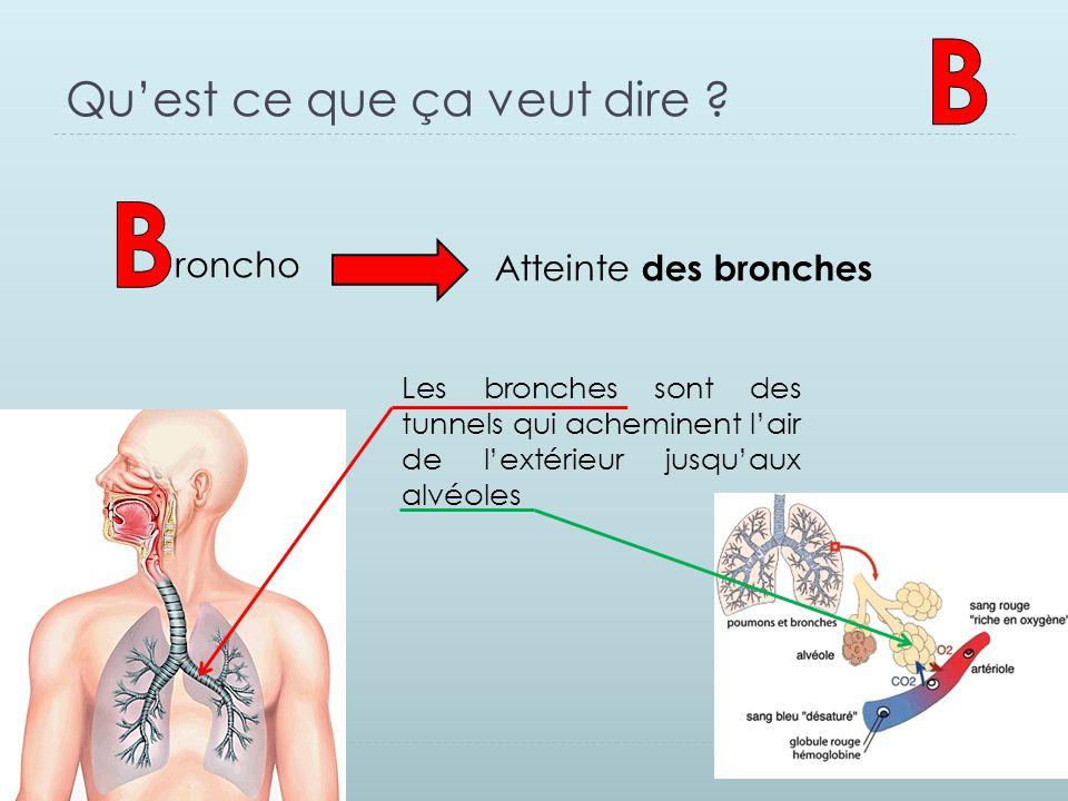 Qu'est ce que ça veut dire ? roncho Atteinte des bronches Les bronches sont des tunnels qui acheminent l'air de l'extérieur jusqu'aux alvéoles
