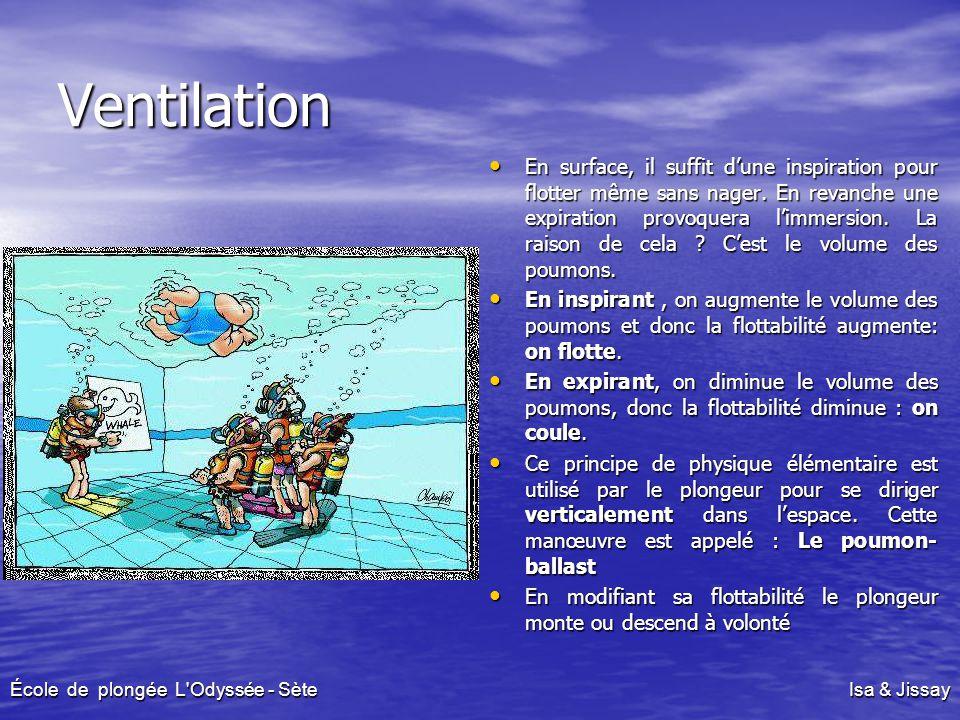 Ventilation En surface, il suffit d'une inspiration pour flotter même sans nager. En revanche une expiration provoquera l'immersion. La raison de cela