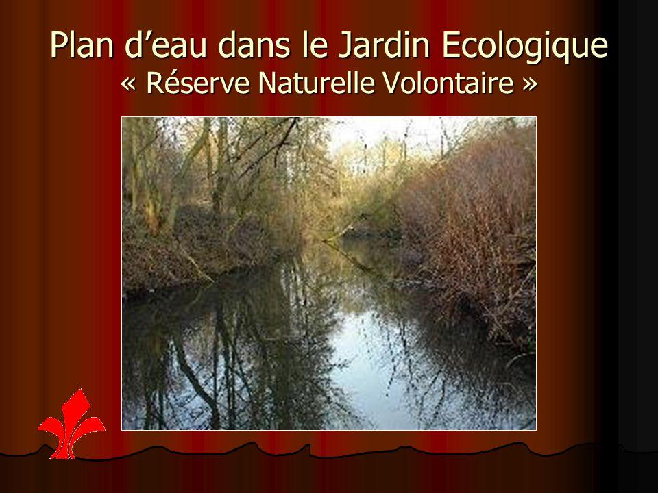 Plan d'eau dans le Jardin Ecologique « Réserve Naturelle Volontaire »