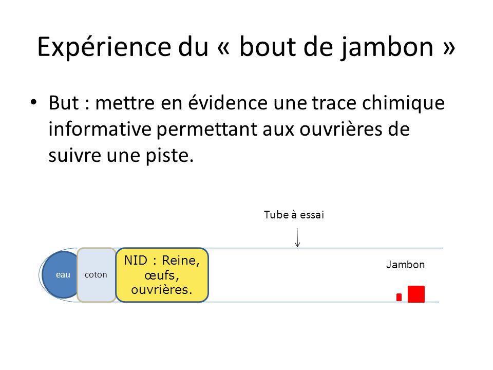 Expérience du « bout de jambon » But : mettre en évidence une trace chimique informative permettant aux ouvrières de suivre une piste. eau coton NID :