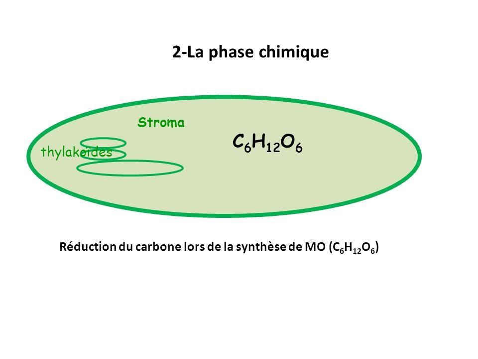 2-La phase chimique Stroma thylakoïdes C 6 H 12 O 6 Réduction du carbone lors de la synthèse de MO (C 6 H 12 O 6 )
