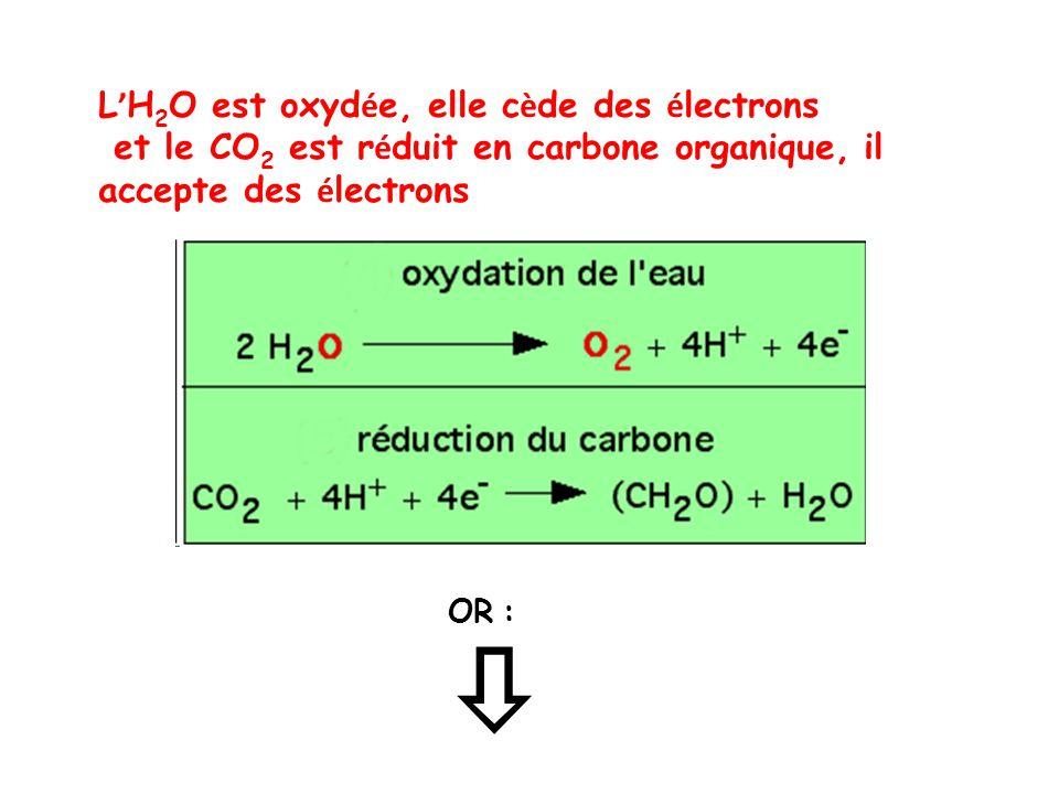 L ' H 2 O est oxyd é e, elle c è de des é lectrons et le CO 2 est r é duit en carbone organique, il accepte des é lectrons  OR :