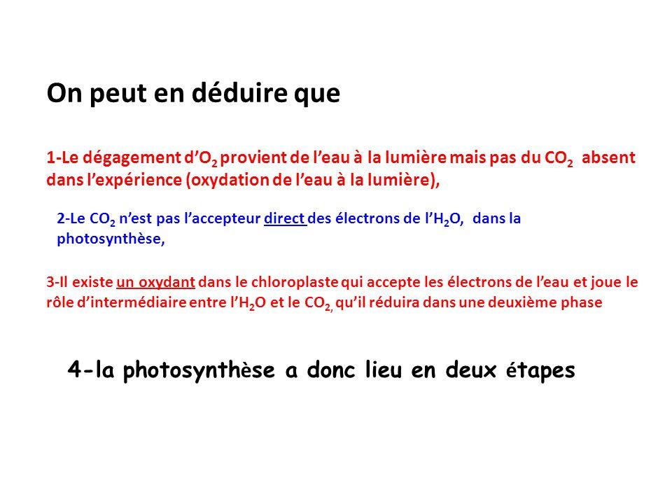 On peut en déduire que 1-Le dégagement d'O 2 provient de l'eau à la lumière mais pas du CO 2 absent dans l'expérience (oxydation de l'eau à la lumière), 4-la photosynth è se a donc lieu en deux é tapes 2-Le CO 2 n'est pas l'accepteur direct des électrons de l'H 2 O, dans la photosynthèse, 3-Il existe un oxydant dans le chloroplaste qui accepte les électrons de l'eau et joue le rôle d'intermédiaire entre l'H 2 O et le CO 2, qu'il réduira dans une deuxième phase