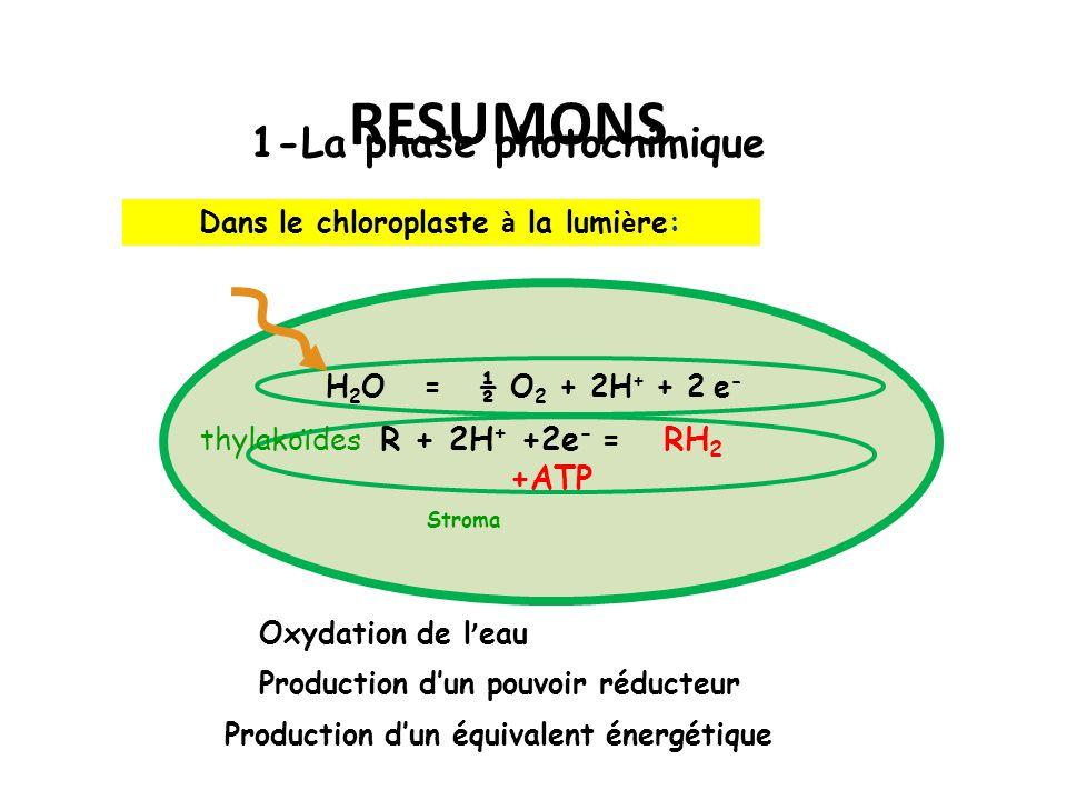 RESUMONS 1-La phase photochimique Oxydation de l ' eau H 2 O = ½ O 2 + 2H + + 2 e - R + 2H + +2e - = RH 2 +ATP Dans le chloroplaste à la lumi è re: Production d'un pouvoir réducteur Production d'un équivalent énergétique thylakoïdes Stroma