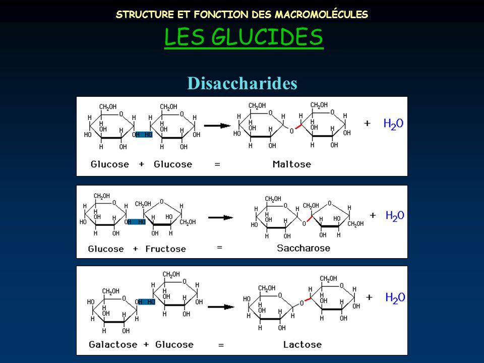 STRUCTURE ET FONCTION DES MACROMOLÉCULES LES GLUCIDES Disaccharides