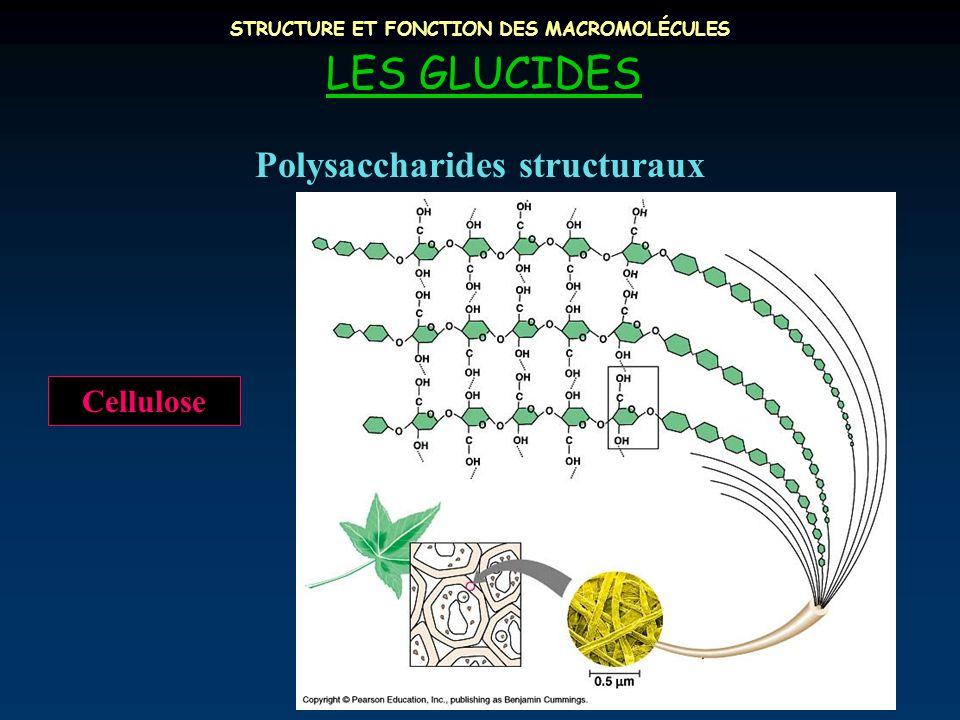 STRUCTURE ET FONCTION DES MACROMOLÉCULES LES GLUCIDES Polysaccharides structuraux Cellulose