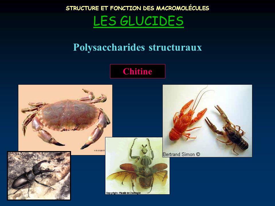 STRUCTURE ET FONCTION DES MACROMOLÉCULES LES GLUCIDES Polysaccharides structuraux Chitine