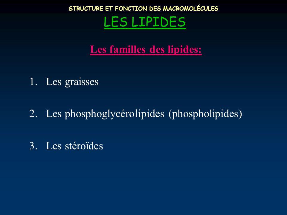STRUCTURE ET FONCTION DES MACROMOLÉCULES LES LIPIDES Les familles des lipides: 1.Les graisses 2.Les phosphoglycérolipides (phospholipides) 3.Les stéroïdes