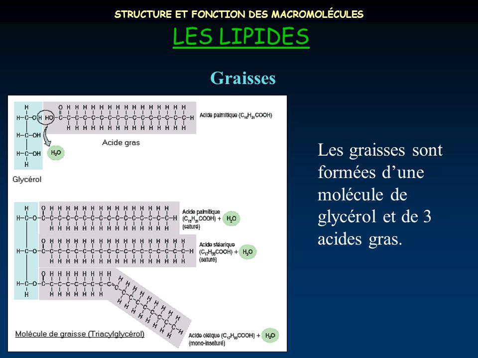 STRUCTURE ET FONCTION DES MACROMOLÉCULES LES LIPIDES Les graisses sont formées d'une molécule de glycérol et de 3 acides gras. Graisses