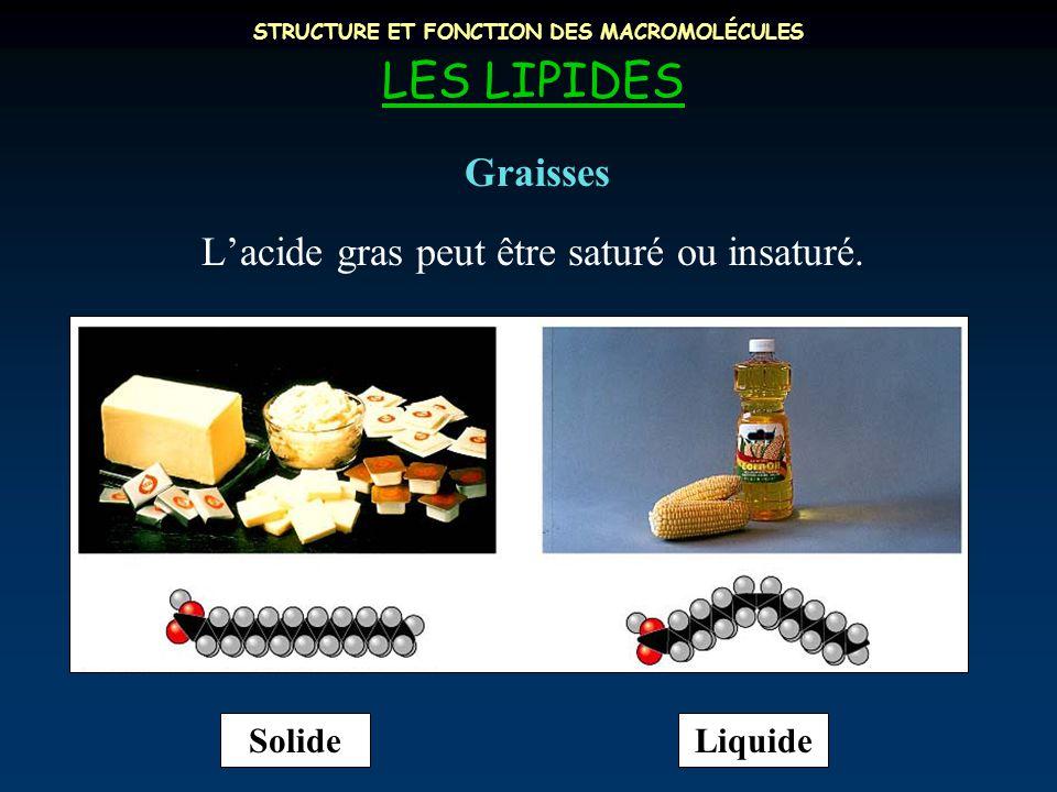 STRUCTURE ET FONCTION DES MACROMOLÉCULES LES LIPIDES L'acide gras peut être saturé ou insaturé. Graisses SolideLiquide