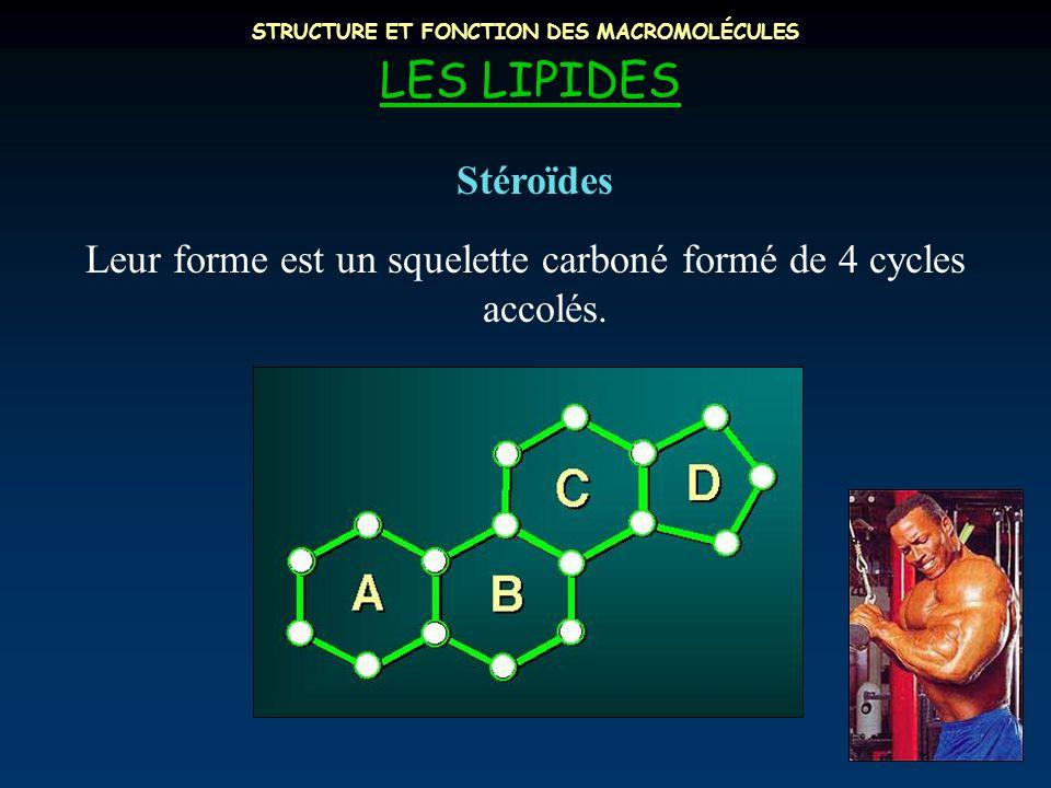 STRUCTURE ET FONCTION DES MACROMOLÉCULES LES LIPIDES Leur forme est un squelette carboné formé de 4 cycles accolés. Stéroïdes