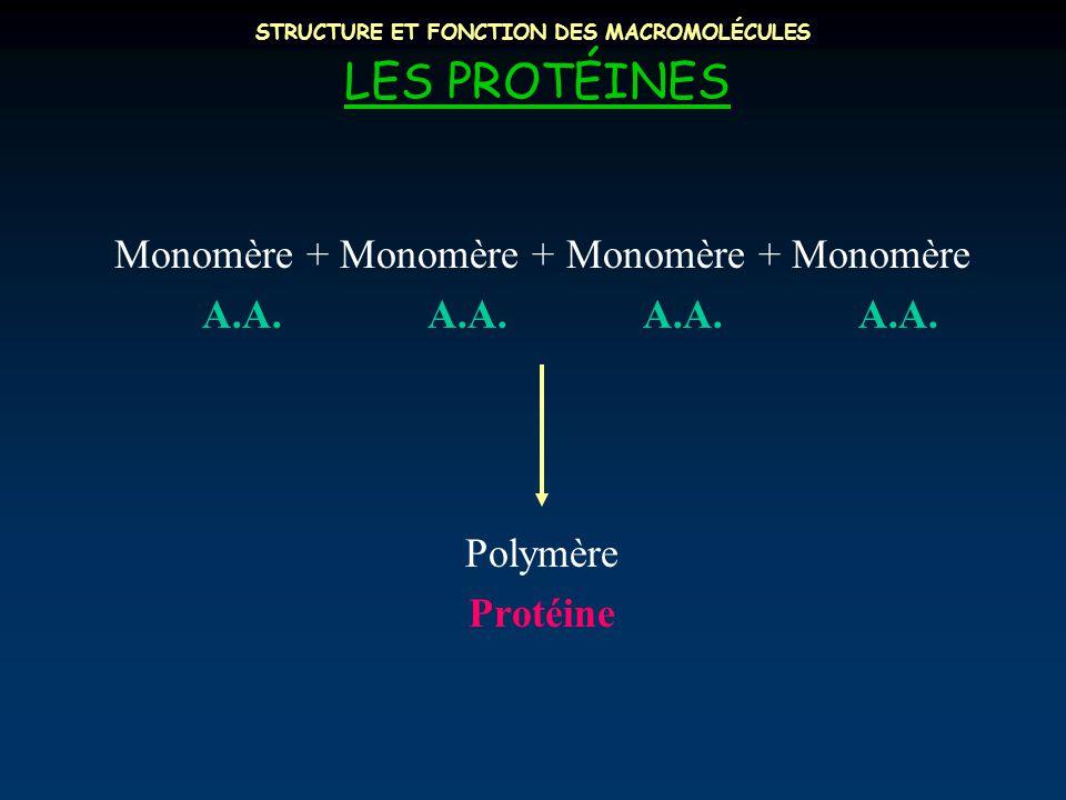 STRUCTURE ET FONCTION DES MACROMOLÉCULES LES PROTÉINES Monomère + Monomère + Monomère + Monomère A.A. A.A. A.A. A.A. Polymère Protéine