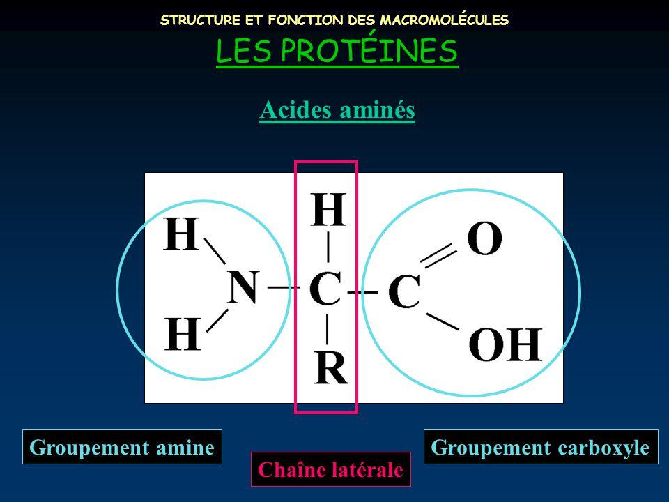 STRUCTURE ET FONCTION DES MACROMOLÉCULES LES PROTÉINES Acides aminés Groupement carboxyle Chaîne latérale Groupement amine