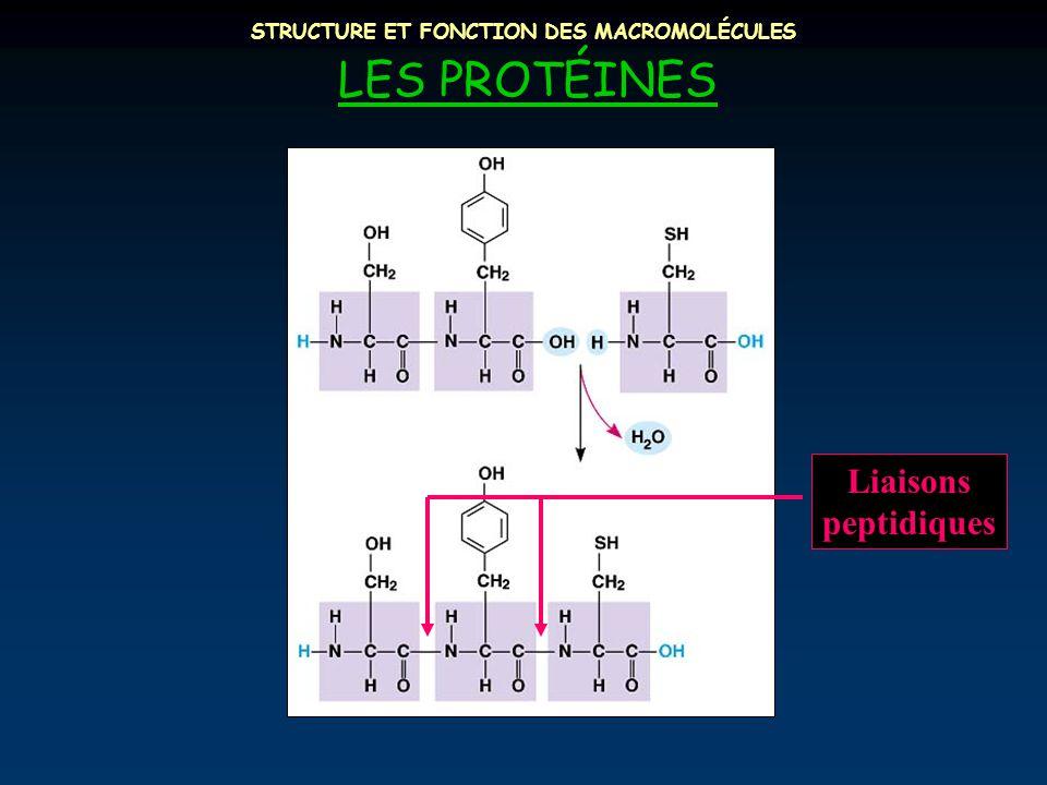 STRUCTURE ET FONCTION DES MACROMOLÉCULES LES PROTÉINES Liaisons peptidiques