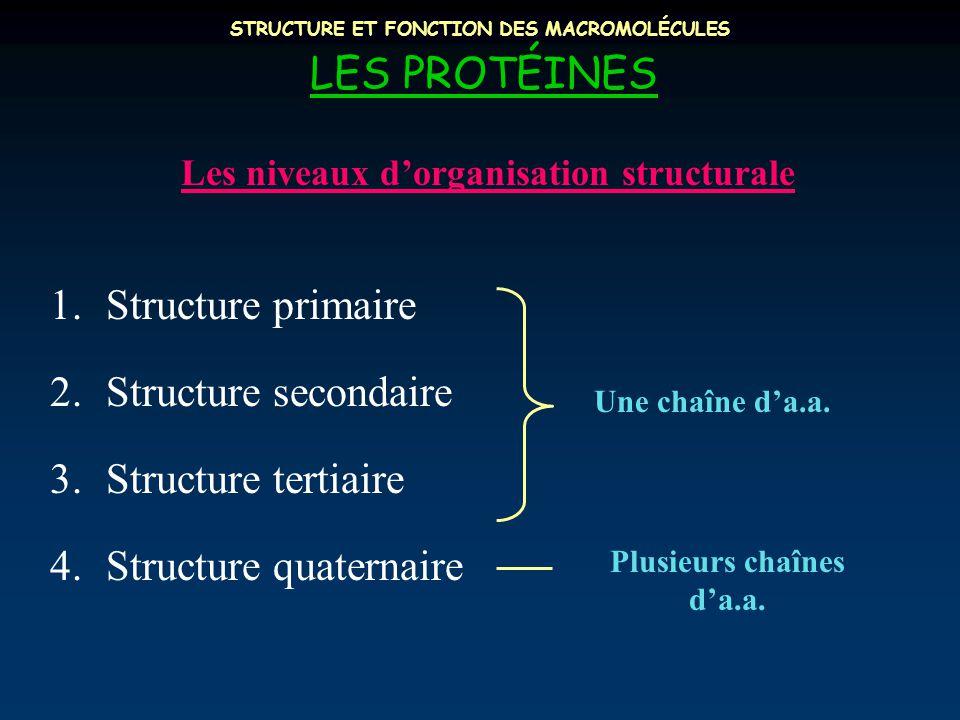 STRUCTURE ET FONCTION DES MACROMOLÉCULES LES PROTÉINES Les niveaux d'organisation structurale 1.Structure primaire 2.Structure secondaire 3.Structure tertiaire 4.Structure quaternaire Une chaîne d'a.a.