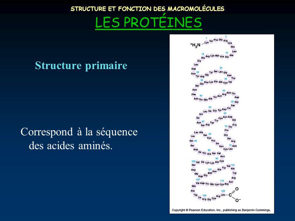 STRUCTURE ET FONCTION DES MACROMOLÉCULES LES PROTÉINES Structure primaire Correspond à la séquence des acides aminés.