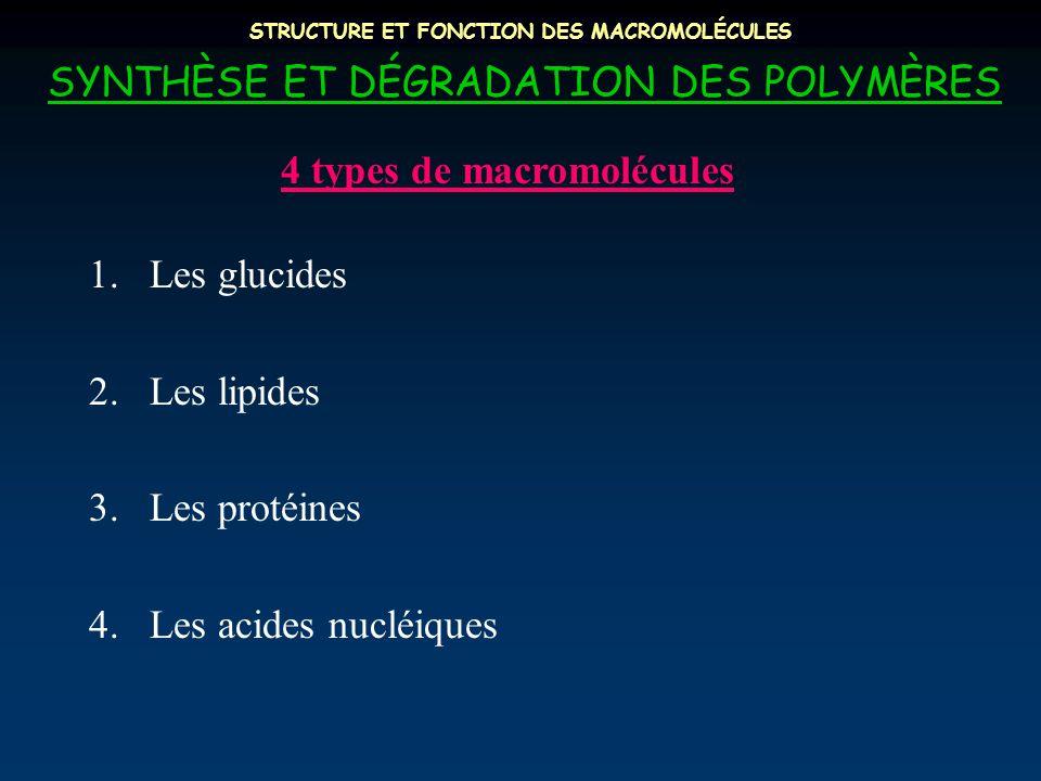SYNTHÈSE ET DÉGRADATION DES POLYMÈRES 1.Les glucides 2.Les lipides 3.Les protéines 4.Les acides nucléiques 4 types de macromolécules