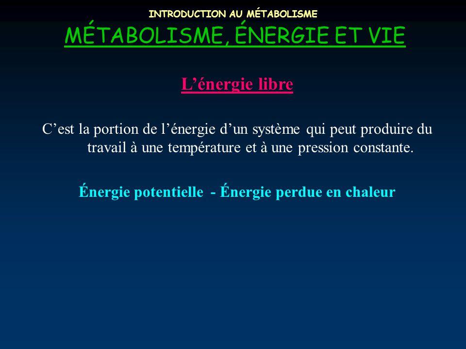 INTRODUCTION AU MÉTABOLISME MÉTABOLISME, ÉNERGIE ET VIE L'énergie libre C'est la portion de l'énergie d'un système qui peut produire du travail à une température et à une pression constante.