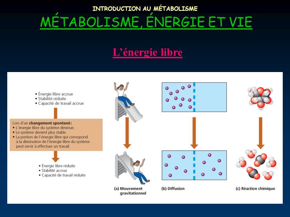 INTRODUCTION AU MÉTABOLISME MÉTABOLISME, ÉNERGIE ET VIE L'énergie libre