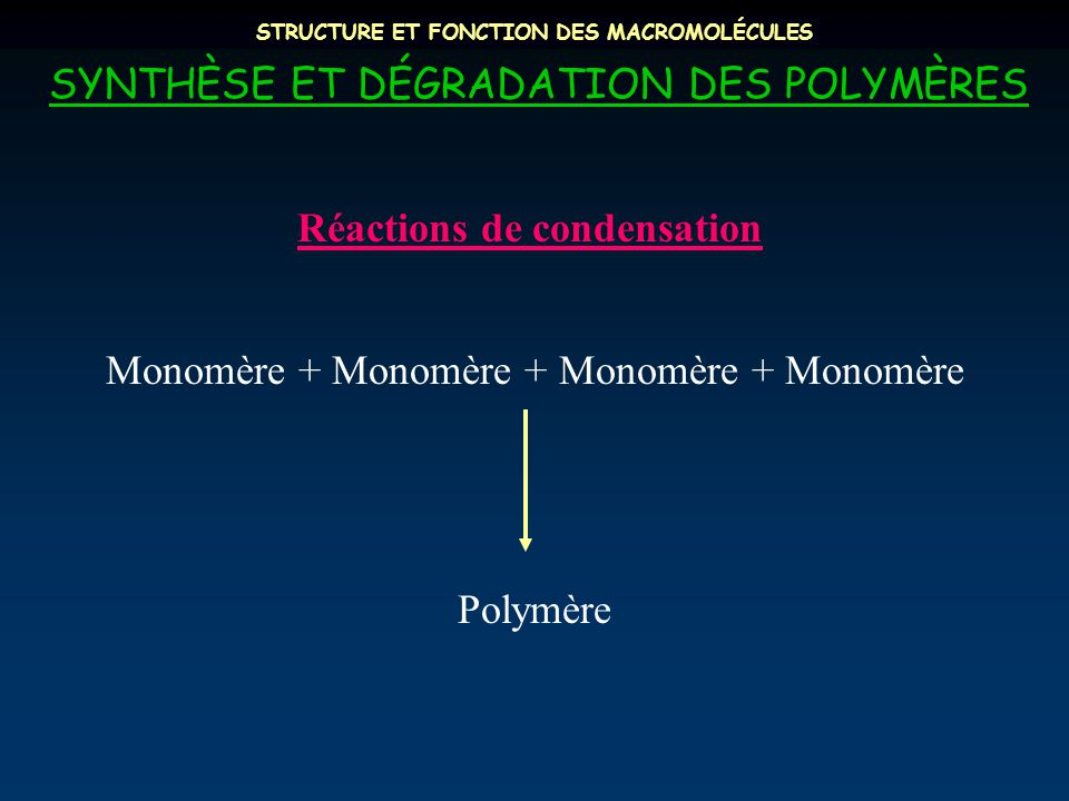 STRUCTURE ET FONCTION DES MACROMOLÉCULES SYNTHÈSE ET DÉGRADATION DES POLYMÈRES Monomère + Monomère + Monomère + Monomère Polymère Réactions de condens