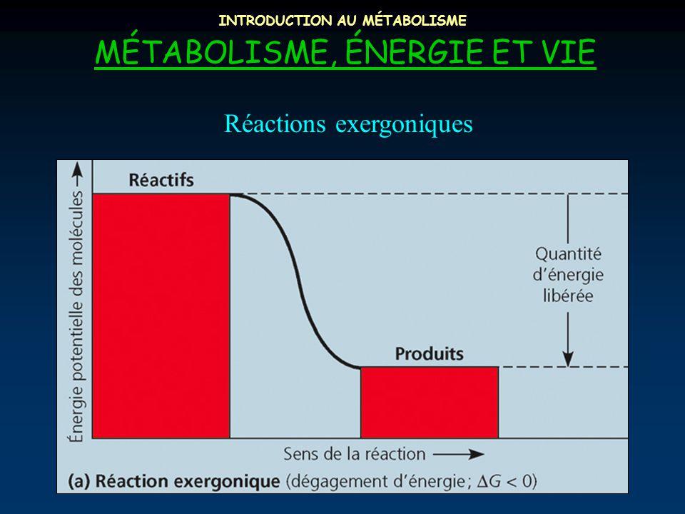 INTRODUCTION AU MÉTABOLISME MÉTABOLISME, ÉNERGIE ET VIE Réactions exergoniques
