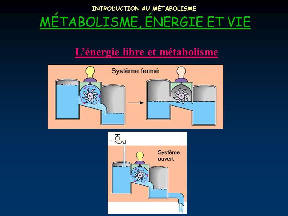 INTRODUCTION AU MÉTABOLISME MÉTABOLISME, ÉNERGIE ET VIE L'énergie libre et métabolisme