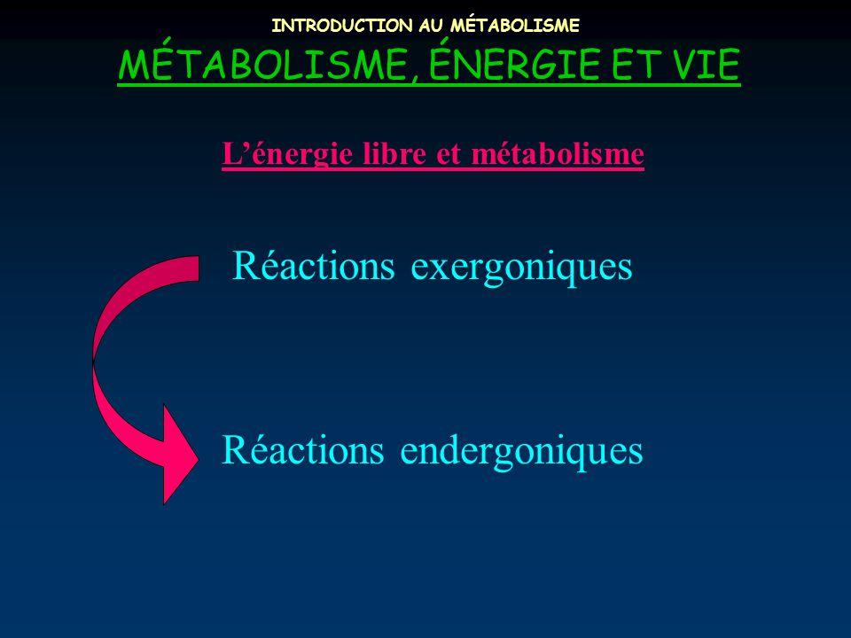 INTRODUCTION AU MÉTABOLISME MÉTABOLISME, ÉNERGIE ET VIE L'énergie libre et métabolisme Réactions exergoniques Réactions endergoniques