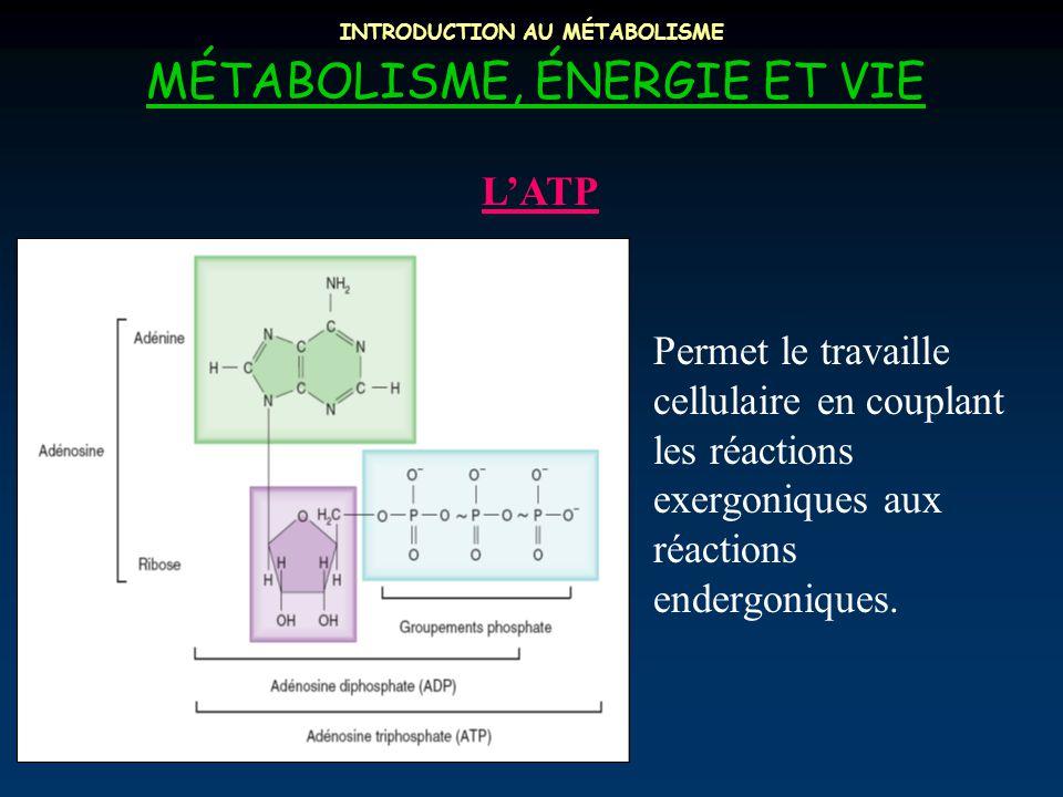 INTRODUCTION AU MÉTABOLISME MÉTABOLISME, ÉNERGIE ET VIE Permet le travaille cellulaire en couplant les réactions exergoniques aux réactions endergoniq