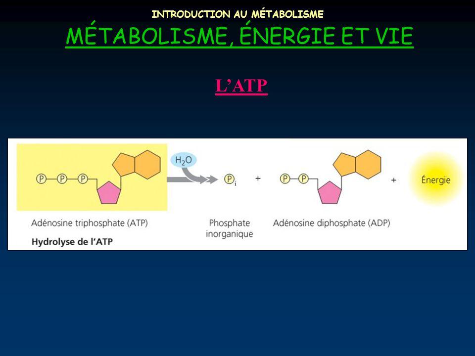 INTRODUCTION AU MÉTABOLISME MÉTABOLISME, ÉNERGIE ET VIE L'ATP