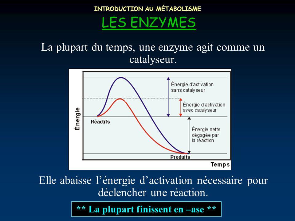 INTRODUCTION AU MÉTABOLISME LES ENZYMES La plupart du temps, une enzyme agit comme un catalyseur. Elle abaisse l'énergie d'activation nécessaire pour