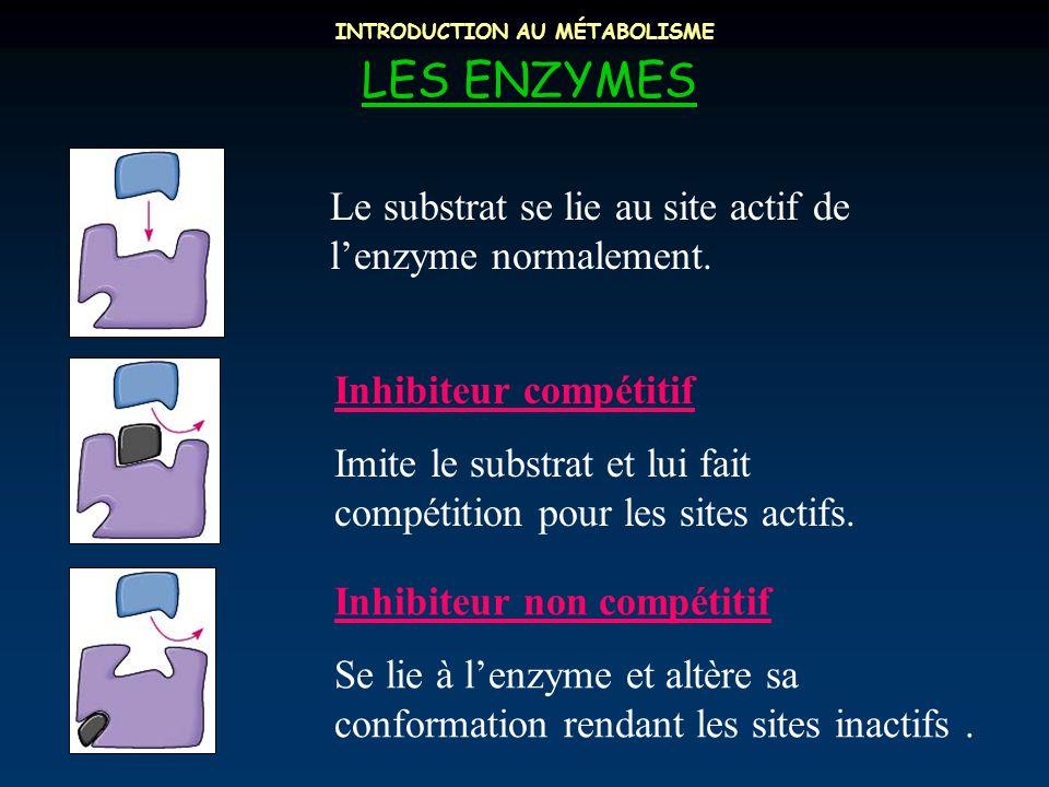 INTRODUCTION AU MÉTABOLISME LES ENZYMES Le substrat se lie au site actif de l'enzyme normalement. Inhibiteur compétitif Imite le substrat et lui fait