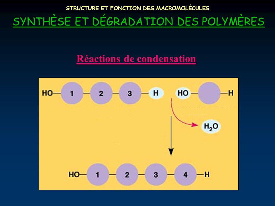 STRUCTURE ET FONCTION DES MACROMOLÉCULES SYNTHÈSE ET DÉGRADATION DES POLYMÈRES Réactions de condensation