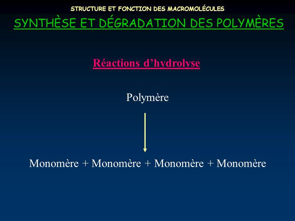 STRUCTURE ET FONCTION DES MACROMOLÉCULES SYNTHÈSE ET DÉGRADATION DES POLYMÈRES Réactions d'hydrolyse Polymère Monomère + Monomère + Monomère + Monomère