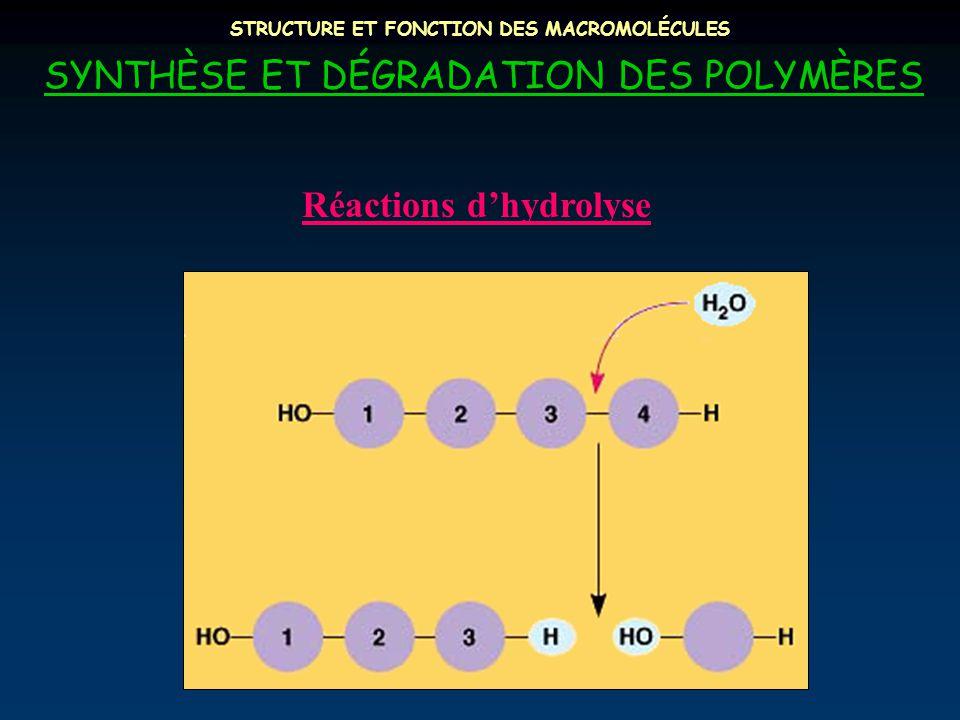 STRUCTURE ET FONCTION DES MACROMOLÉCULES SYNTHÈSE ET DÉGRADATION DES POLYMÈRES Réactions d'hydrolyse