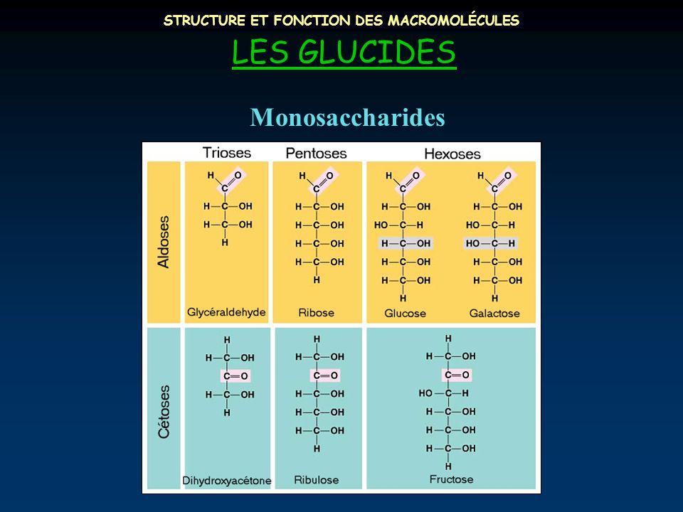 STRUCTURE ET FONCTION DES MACROMOLÉCULES LES GLUCIDES Monosaccharides
