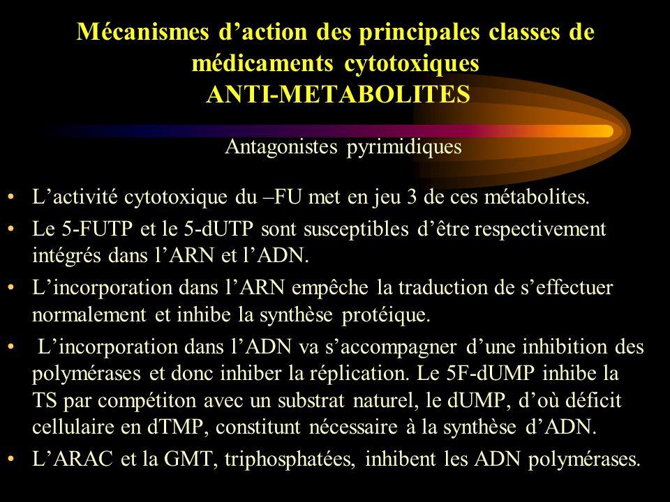 Mécanismes d'action des principales classes de médicaments cytotoxiques ANTI-METABOLITES Les anti-puriques (6-MP, 6-TG, Fludarabine) inhibent la synthèse des AN en entrant en compétition avec les nucléotides puriques physiologiques.