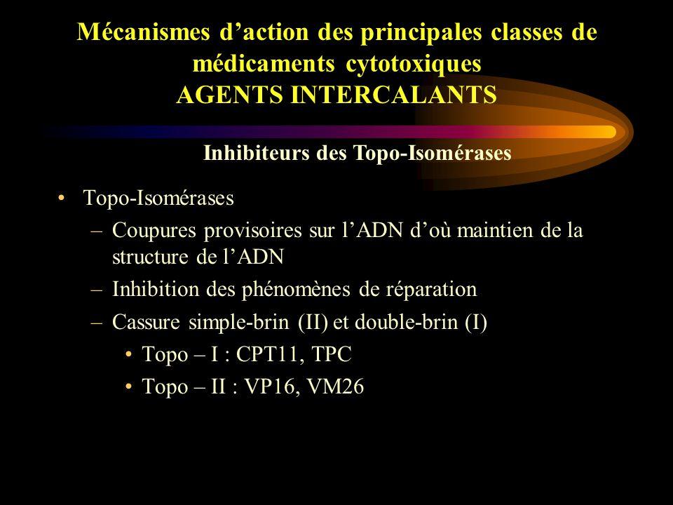 Mécanismes d'action des principales classes de médicaments cytotoxiques AGENTS ALKYLANTS Moutardes à l'Azote (CPM, IFM) –Métabolisation au niveau hépatique par différents enzymes (dont P450) en métabolites actifs Organo-Platines –Hydrolyse de leurs groupements labiles (chlore ou carboxylate)  di-aquo-platines –Adduits de platine sur l'ADN –Similitude CDDP – CBDCA : même DAP diaminé –Différence L-OHP : di-amino-cyclo-hexane