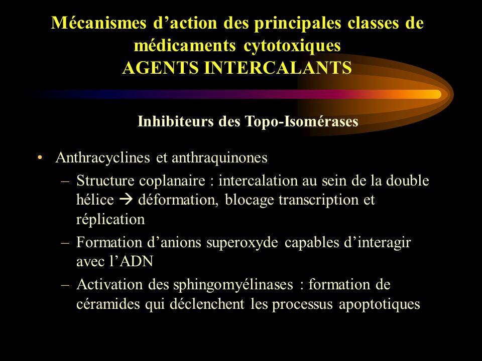 Mécanismes d'action des principales classes de médicaments cytotoxiques AGENTS INTERCALANTS Topo-Isomérases –Coupures provisoires sur l'ADN d'où maintien de la structure de l'ADN –Inhibition des phénomènes de réparation –Cassure simple-brin (II) et double-brin (I) Topo – I : CPT11, TPC Topo – II : VP16, VM26 Inhibiteurs des Topo-Isomérases