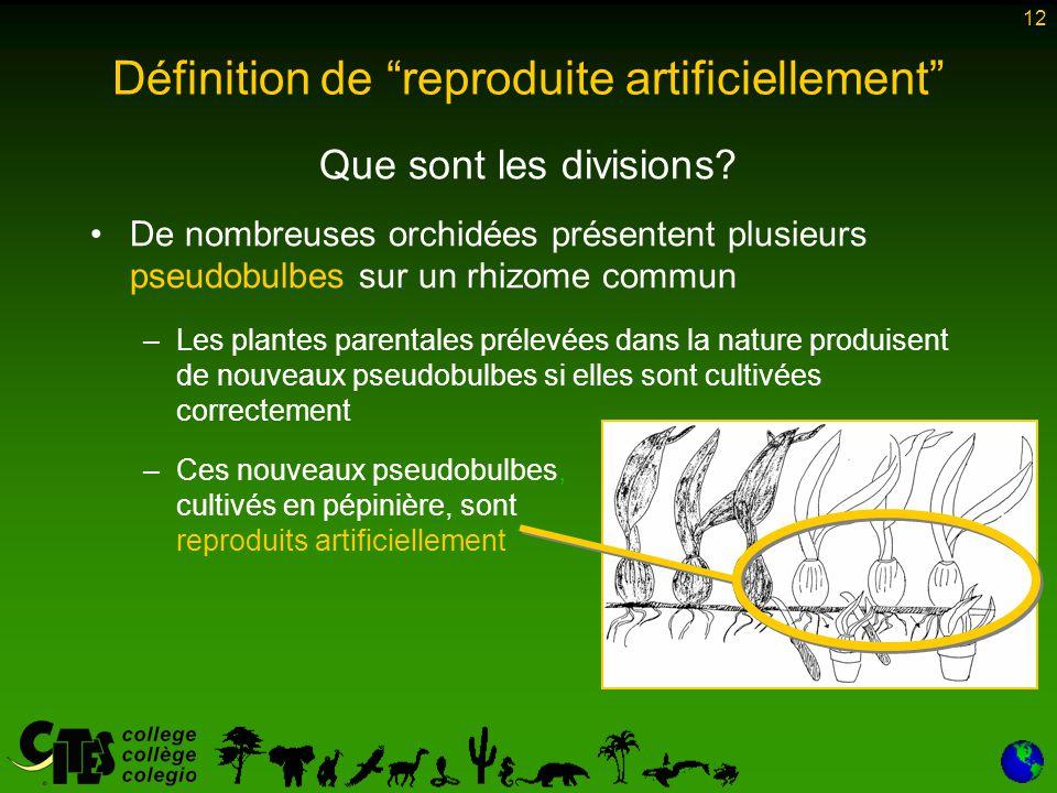 """12 Définition de """"reproduite artificiellement"""" Que sont les divisions? De nombreuses orchidées présentent plusieurs pseudobulbes sur un rhizome commun"""