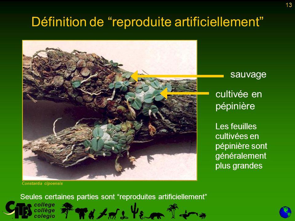 """13 Constantia cipoensis Seules certaines parties sont """"reproduites artificiellement"""" sauvage cultivée en pépinière Les feuilles cultivées en pépinière"""