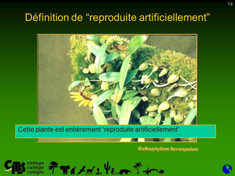 """14 Définition de """"reproduite artificiellement"""" Bulbophyllum flavisepalum Cette plante est entièrement """"reproduite artificiellement"""""""