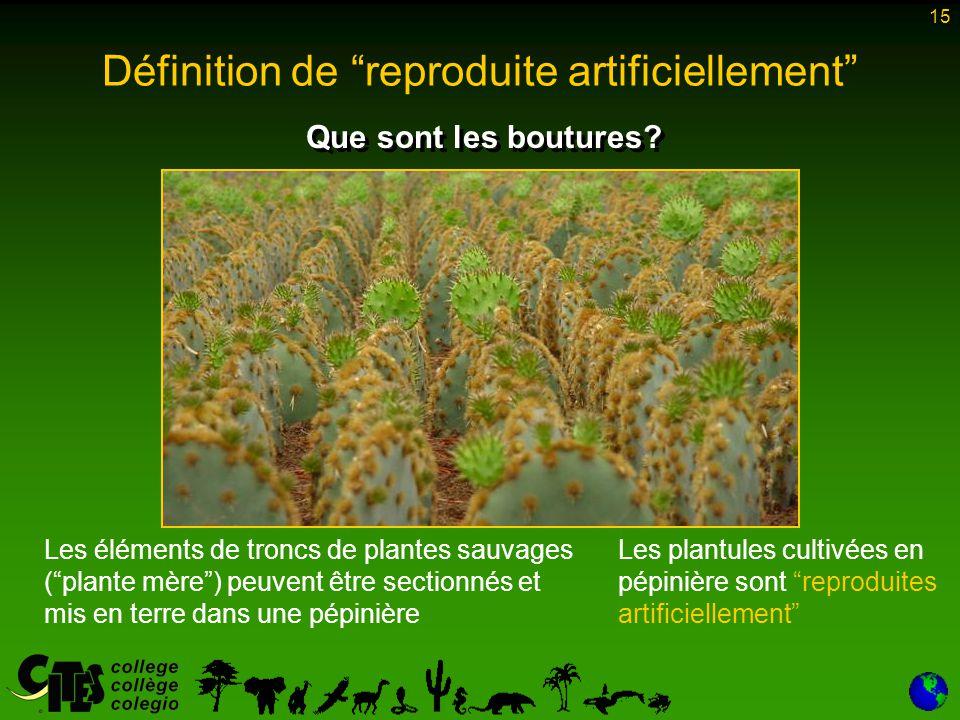 """15 Que sont les boutures? Les éléments de troncs de plantes sauvages (""""plante mère"""") peuvent être sectionnés et mis en terre dans une pépinière Les pl"""
