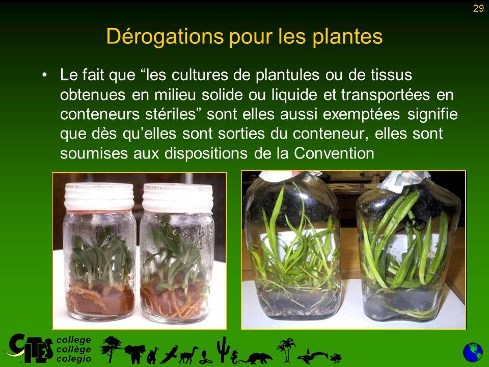 """29 Dérogations pour les plantes Le fait que """"les cultures de plantules ou de tissus obtenues en milieu solide ou liquide et transportées en conteneurs"""