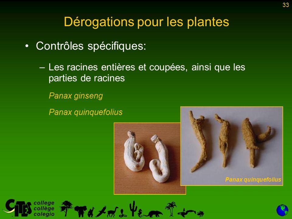 33 Dérogations pour les plantes Contrôles spécifiques: –Les racines entières et coupées, ainsi que les parties de racines Panax ginseng Panax quinquef