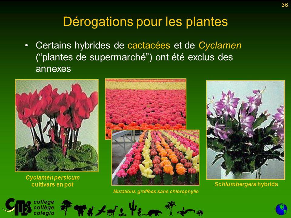 """36 Certains hybrides de cactacées et de Cyclamen (""""plantes de supermarché"""") ont été exclus des annexes Dérogations pour les plantes Cyclamen persicum"""
