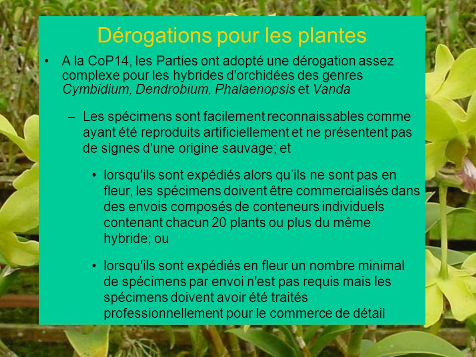 37 A la CoP14, les Parties ont adopté une dérogation assez complexe pour les hybrides d'orchidées des genres Cymbidium, Dendrobium, Phalaenopsis et Va