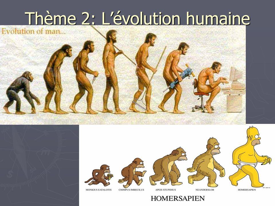 Thème 2: L'évolution humaine