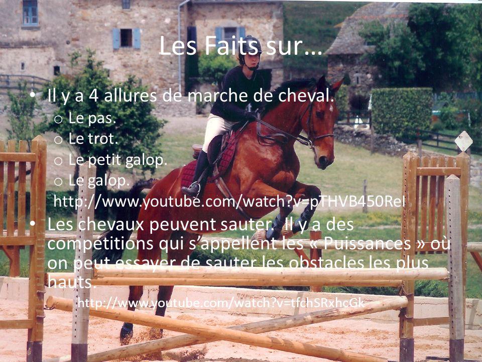 Les Faits sur… Il y a 4 allures de marche de cheval.