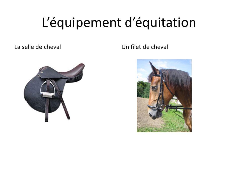 L'équipement d'équitation La selle de chevalUn filet de cheval